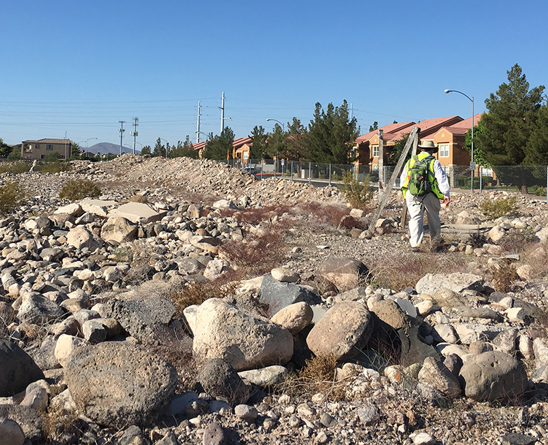 A BEC Environmental Biologist does a biological survey of an undeveloped desert lot in an urban setting